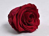 Роза стабилизированная бутон красный 5,5см, фото 3