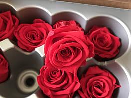 Роза стабилизированная бутон красный 5,5см