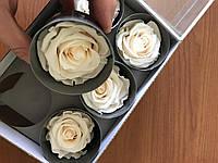 Роза стабилизированная бутон белый 5.5см-6 диаметр, фото 2