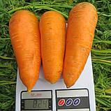 Насіння моркви Забарвлення (500 г), фото 2
