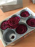 Роза стабилизированная бутон алый 5.5см-6 диаметр
