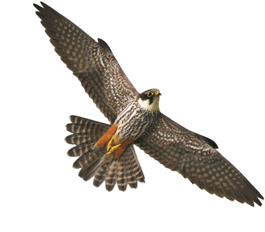 Визуальный отпугиватель птиц Хищник 2