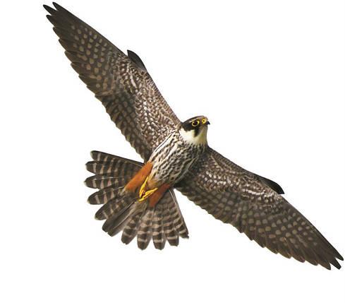 Визуальный отпугиватель птиц Хищник 2, фото 2