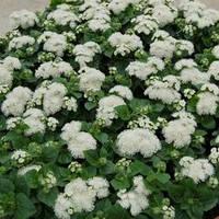 Семена агератум Алоха F1, белый 1 000 сем. (драже)