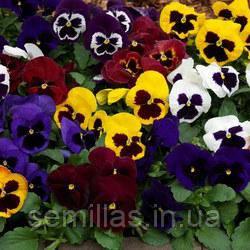 Семена виола Целло F1, крупноцветковая смесь 1 000 сем.