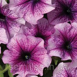 Семена петуния Бригитта F1, многоцветковая низкорослая (мультифлора) фиолетовая с прожилками 1 000 сем. (драже)
