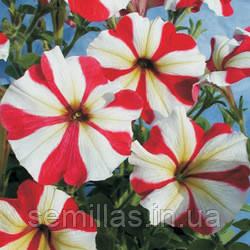 Семена петуния Генриетта F1, многоцветковая низкорослая (мультифлора) красно белая звезда 1 000 сем. (драже)