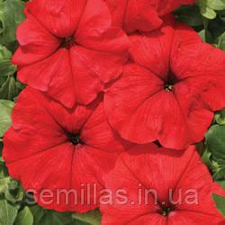 Семена петуния Марика F1, многоцветковая низкорослая (мультифлора) красная 1 000 сем. (драже)