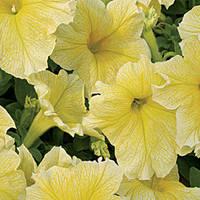 Семена петуния Елоу F1, крупноцветковая низкорослая (грандифлора) желтая 1 000 сем. (драже)