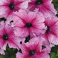 Семена петуния Снени F1, крупноцветковая низкорослая (грандифлора) светло-фиолетовая 1 000 сем. (драже)