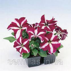 Семена петуния Танго F1, крупноцветковая низкорослая (грандифлора) бургундская звезда 1 000 сем. (драже)