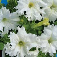 Семена петунии Крайковый Завой F1, 1000 сем. (драже), белая крупноцветковая низкорослая бахромчатая