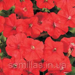 Семена петуния Карлик F1, мелкоцветковая низкорослая (минифлора) красная 1 000 сем. (драже)