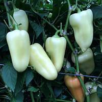 Семена перца сладкого Хаски F1 (500 сем.)