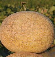 Карамель F1 - семена дыни, Clause - 1 000 семян
