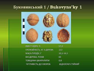 Саженцы грецкого ореха Буковинский1(ПРИВИТЫЙ) 2-х летний
