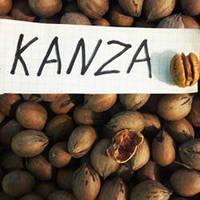 Саженцы ореха Пекан Kanza