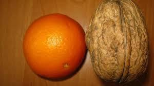 Саженцы грецкого ореха Великан 2-х летний