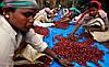 Кофе в зернах Віденська кава Арабика Колумбия Сьюпремо 500 г, фото 4