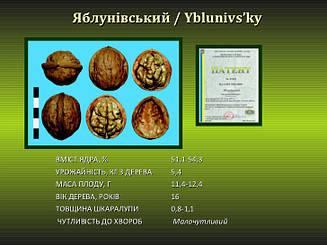 Саженцы грецкого ореха Яблунивский 2-х летний