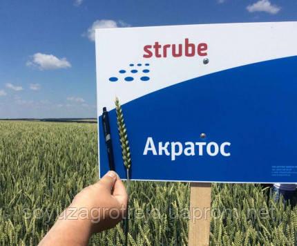 Акратос 1р озимая пшеница STRUBE