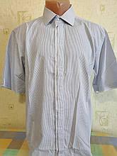 Чоловіча сорочка Enriko короткий рукав