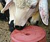 Соль–лизунец SELCO BLOCK ROYAL ILAC для овец, коз. Блоки по 5 кг. Турция, фото 5