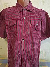 Чоловіча сорочка ZAZZONI короткий рукав