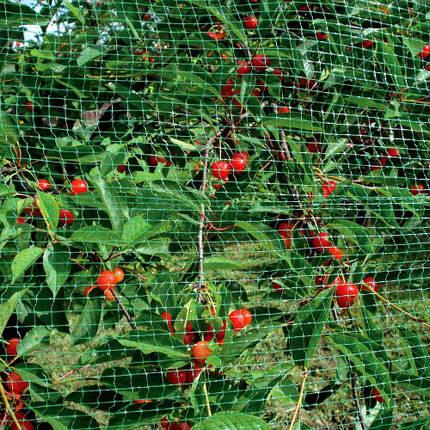 Защита от птиц TENAX ORTOFLEX 10 х 2м, фото 2