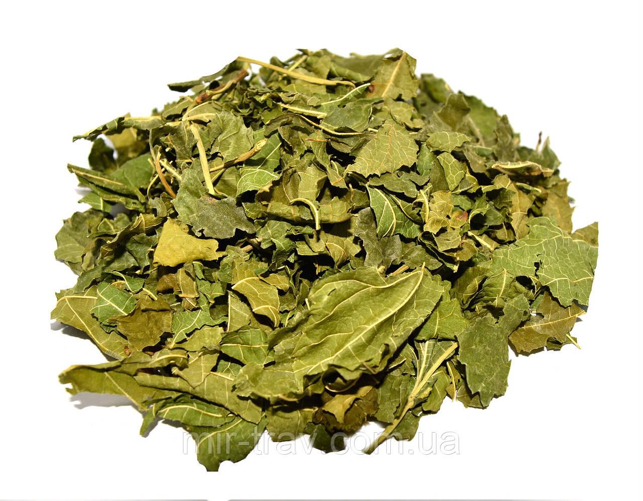 Шелковица листья