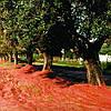 Сетка для сушки и сбора фруктов TENAX PLURIMA 62,5*4м