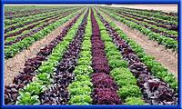 Современные методы полива и орошения - смогут ли оживить аграрный комплекс