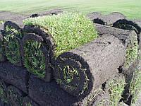 Рулонный газон Кривой рог