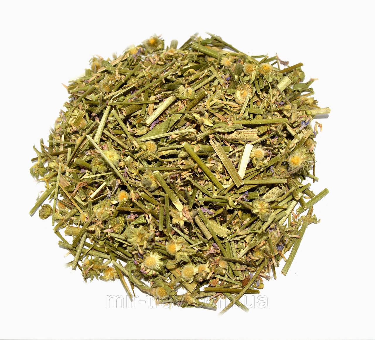 Короставник полевой трава