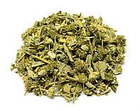 Шандра обыкновенная трава 100 грамм