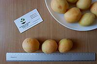 """Абрикос """"Ананасный"""" семена (10 штук) насіння, косточка, семечка для выращивания саженцев + инструкция, фото 1"""