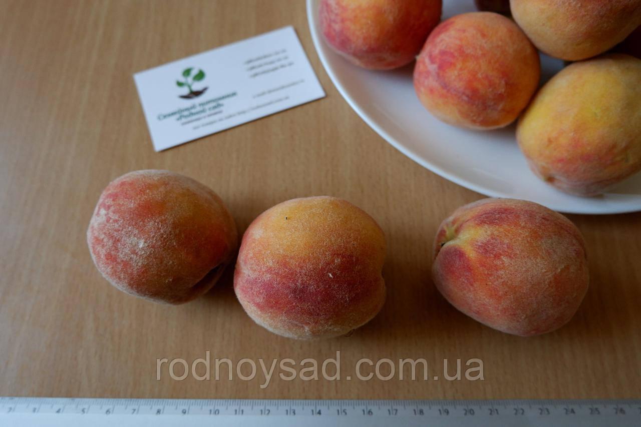 Персик (август) семена (10 штук) насіння, косточка, семечка для выращивания саженцев + инструкция