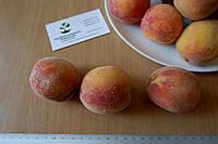 Персик (август) семена (10 штук) насіння, косточка, семечка для выращивания саженцев + инструкция, фото 1