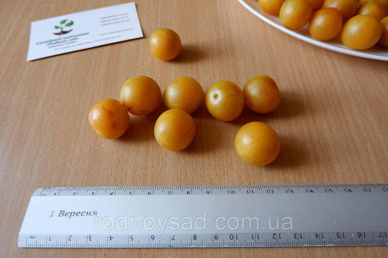Алыча жёлтая семена (10 шт) Prúnus cerasífera (насіння для саджанців)семечка, косточка для саженцев
