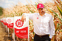 Гибрид кукурузы Лимагрейн Аалвито (ФАО 210), фото 1