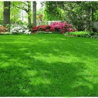 Газонная трава  Дачный ковер (премиум)