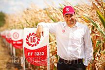 Гибрид кукурузы Лимагрейн Латизана (ФАО 320)
