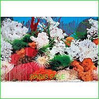Фон №9029 для аквариума с высотой 50 см