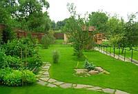 Газонная трава для ленивых (карликовый)