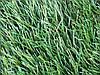 Искусственная трава JUTAgrass Winner 40/160