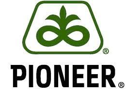 Cемена подсолнечника Pioneer