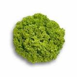 Семена салата витаминный набор (Афицион, Кармези, Левистро)  30 шт. , фото 3