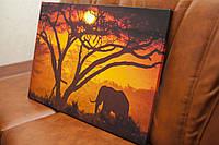 Слон. 40х50 см. Картина на холсте.
