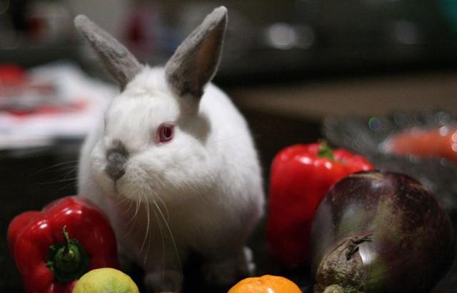 Ветеринарные рекомендации для кроликов