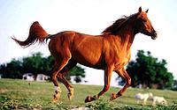 Ветеринарные рекомендации для лошадей